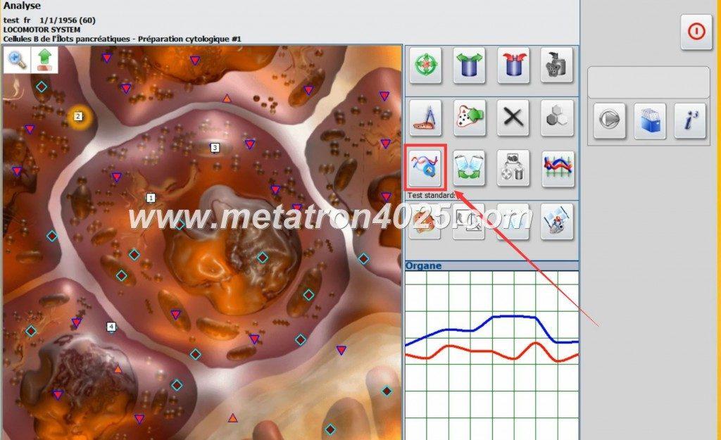 metatron nls diagnostic