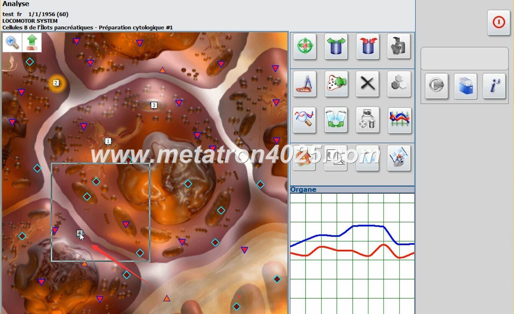metatron nls